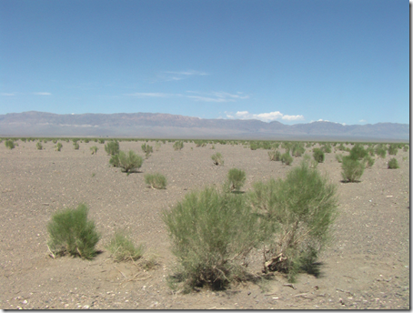 A desert peppered with Saxaul bushes and shrubs