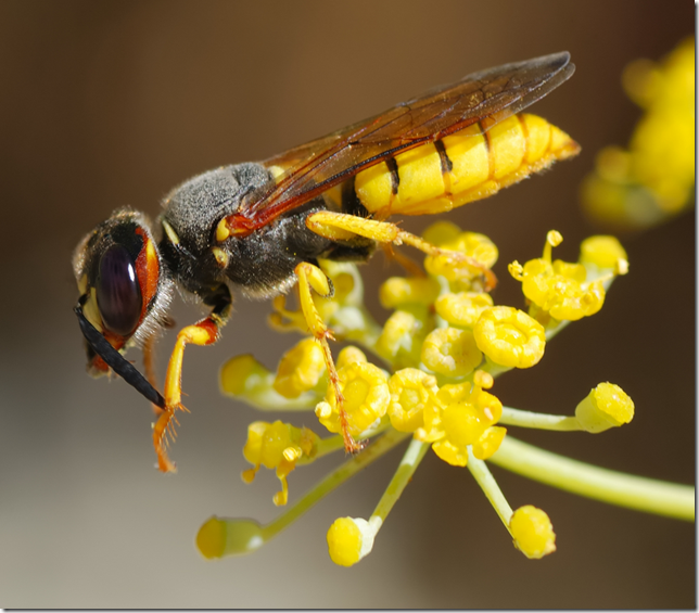 Wasp settled on a flower