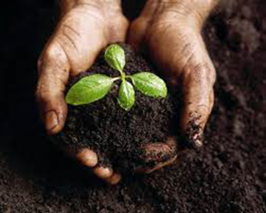 Human hands holding a plant and compost