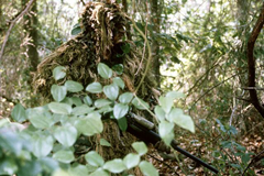 A sniper wearing a ghillie suit to remain hidden